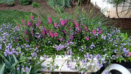 bathtub flowers 2.jpg
