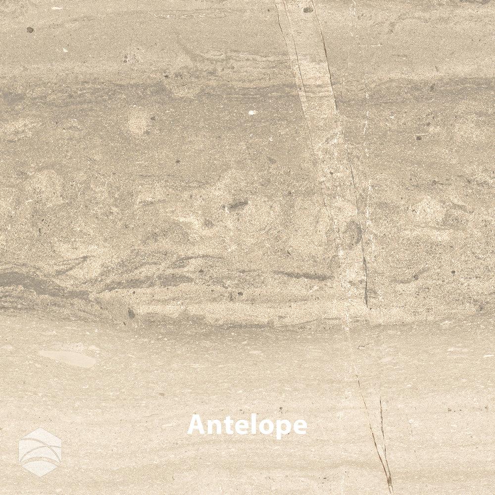 Antelope_V2_14x14.jpg