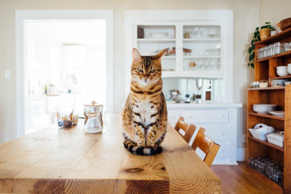 The Oily Home Companion