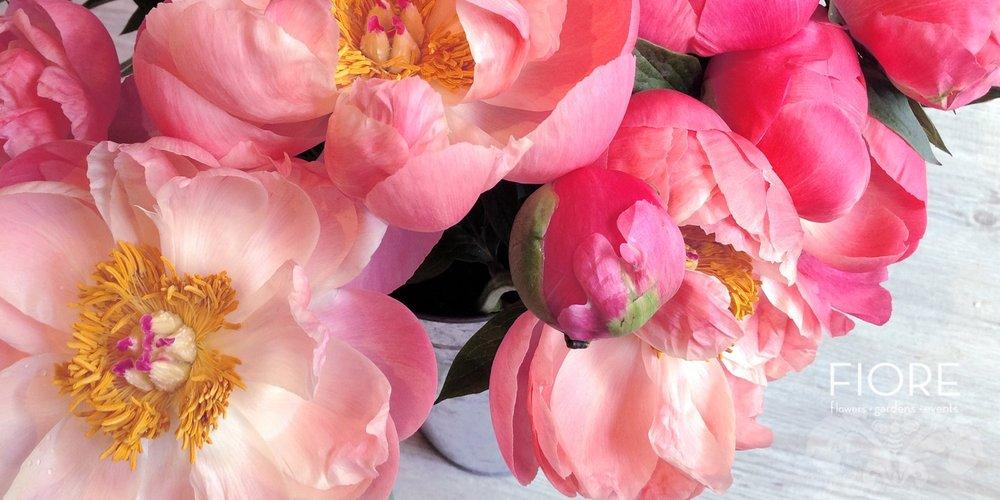 wmslide-pink-peonies_1_orig.jpg