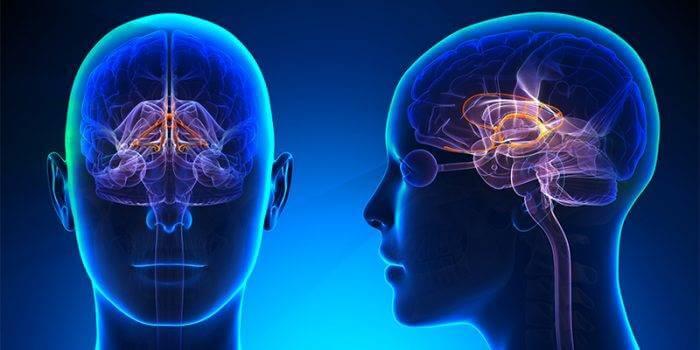 nurobodi-limbic-system-brainwave-entrainment-melbourne.jpg