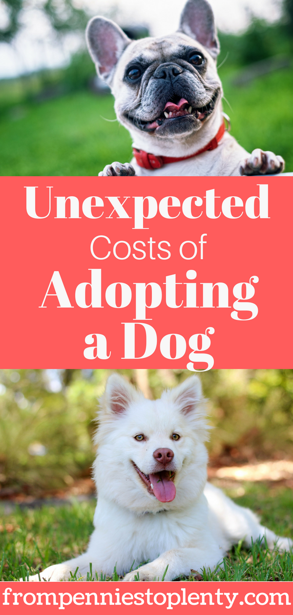 Unexpected costs of adopting a dog