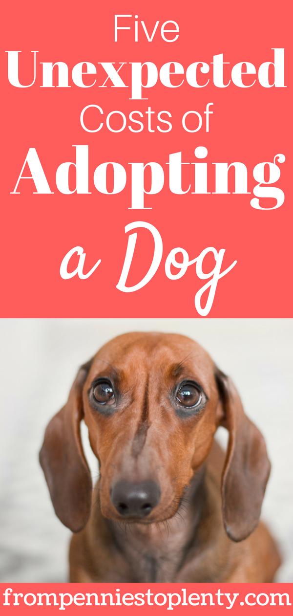Adopting a dog 1