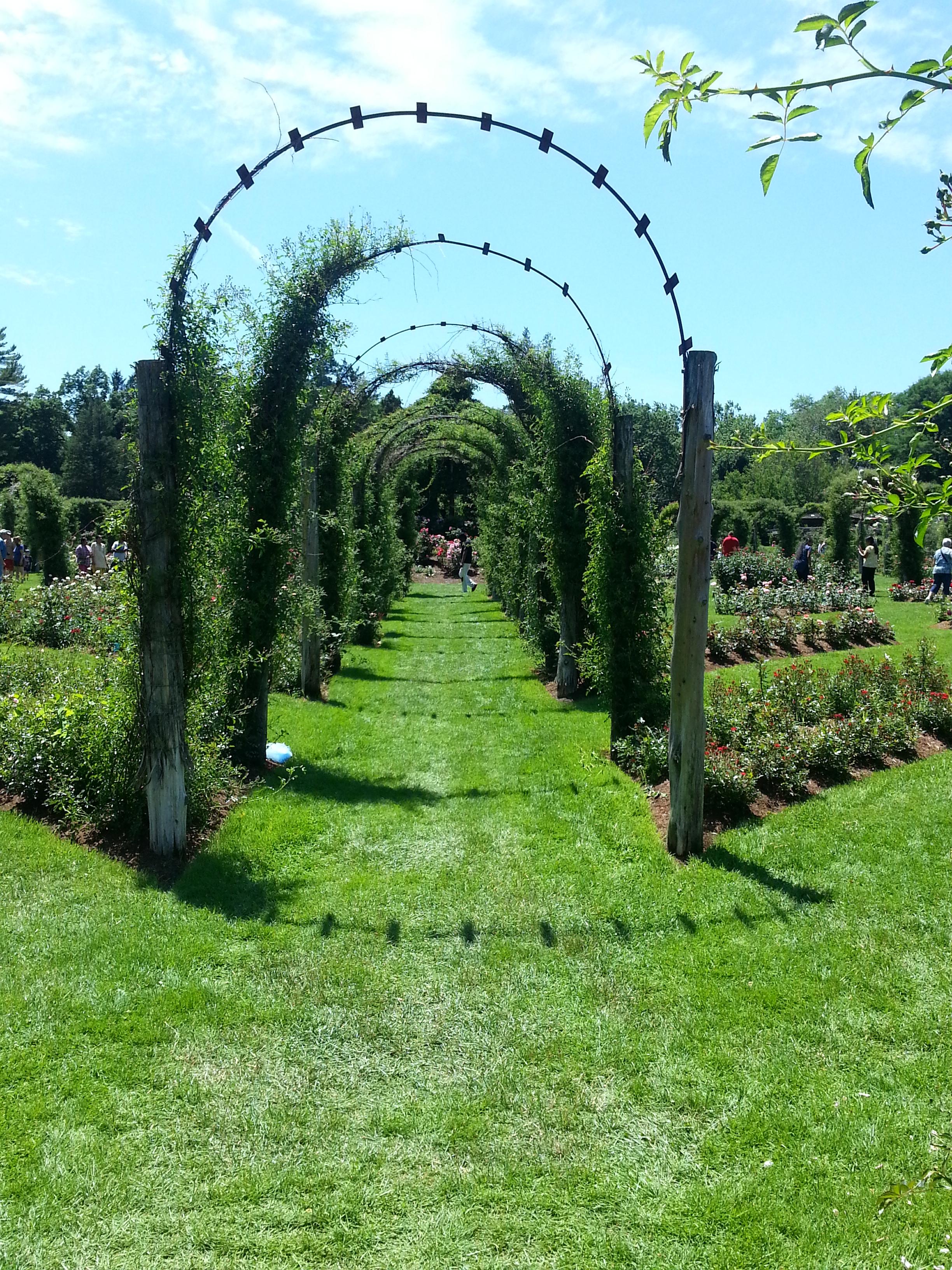 Arbor Path