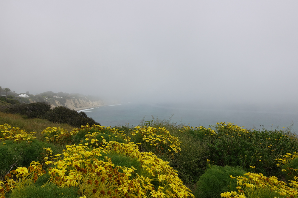 The view from the trail at Point Dume, Malibu, looking west.