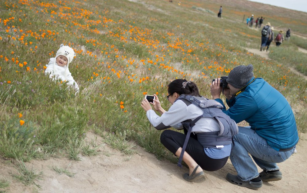 Parents photograph their child at the Antelope Valley Poppy Reserve in Antelope Valley California on April 8, 2017 at 11:19 AM (Photo By: Zane Meyer-Thornton