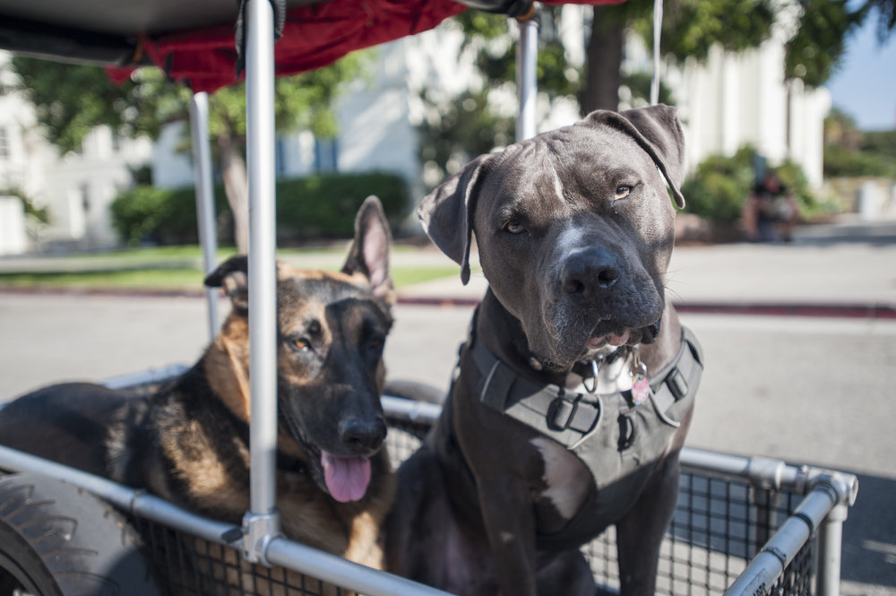 COAST provided many dogs and dog owners a safe environment to roam around at in streets that would normally be congested with motor vehicles. The second ever COAST was held in Santa Monica, Calif. on October 1, 2017. (Photo by: Justin Han/Corsair Staff)