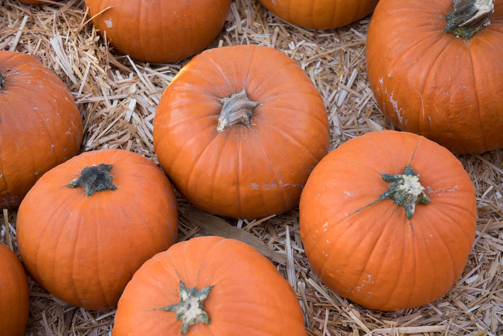 Pumpkins are scattered all around the Mr. Bones Pumpkin Patch in Culver City, Calif. on October 15th, 2017