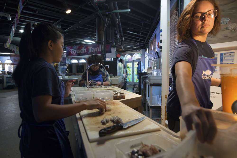 Juvilyn Bolaoen, 23, (Left), Ari Adler, 25, (Center) and Roxanne Garibay, 24, (Right) aquarist interns, at Heal the Bay's Santa Monica Pier Aquarium, are preparing squid to feed to the sea creatures that they take care of, on October 26, 2017 in Santa Monica, California. The Aquarium is preparing for the upcoming Fishy Fest event on October 28-29. (Josue Martinez)
