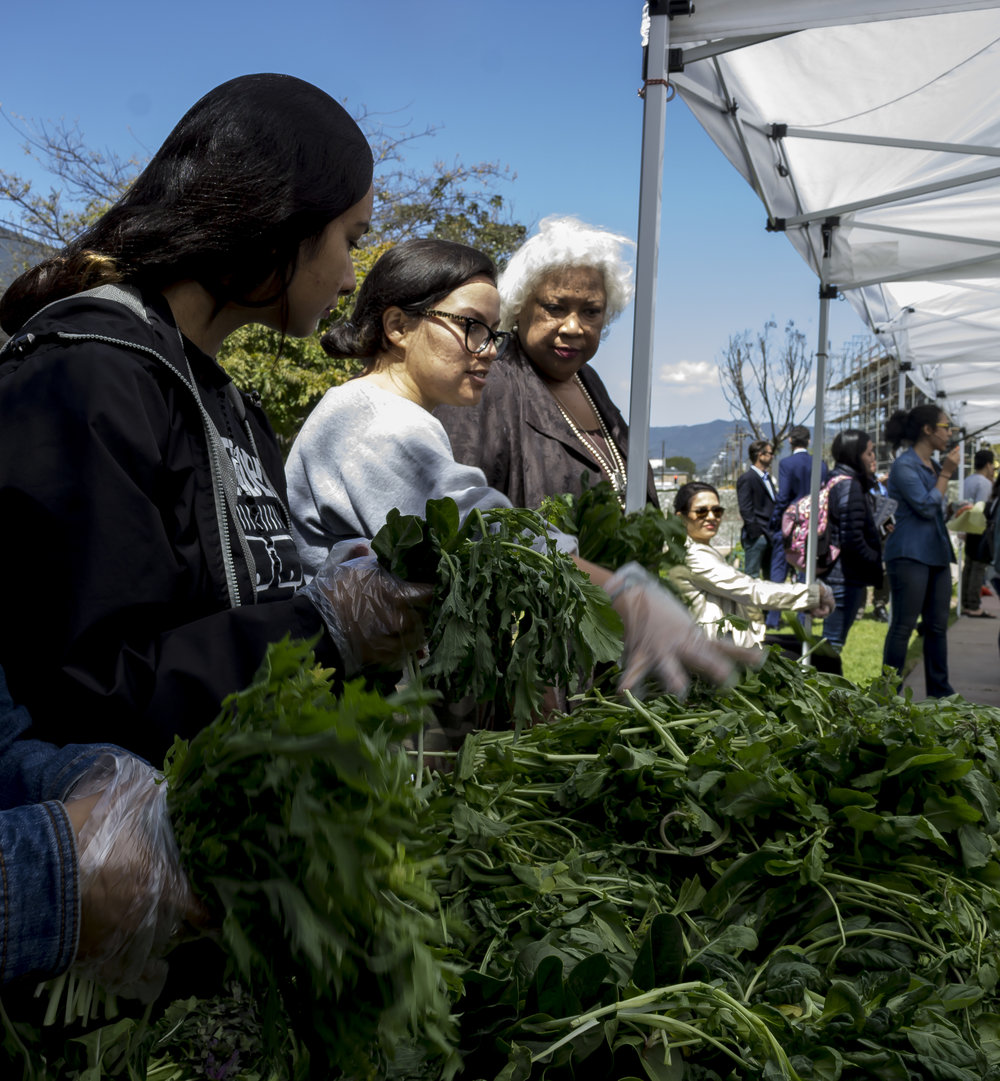 Dr. Kathryn Jeffery (right), President of Santa Monica College, talks with volunteers at the Farmers Market. About 40 volunteers helping for the Marmers Market and other stands. Earth Week started with 'Students Feeding Students' Free Farmers Market & Food Demos on Monday, April 16, 2018. At Santa Monica College, Santa Monica California. (Emeline Moquillon/Corsair Photo)
