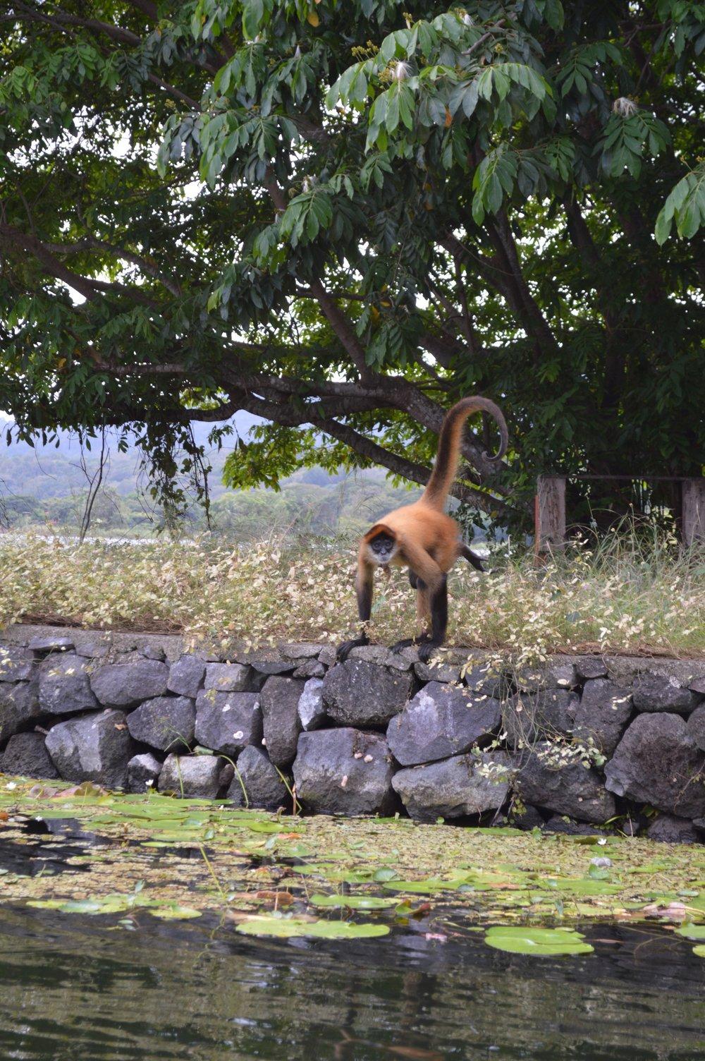 Nicaragua 4.jpg