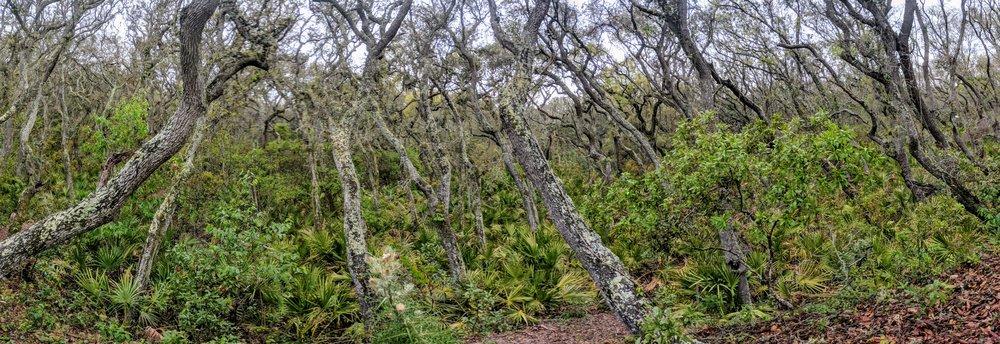 From Stafford Beach Access Trail