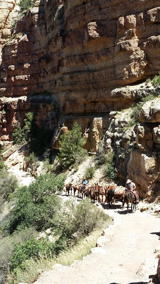 mules-on-the-bright-angel-trail-sep-2015.jpg
