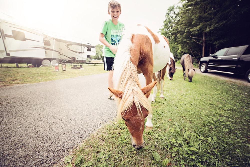 Campsite Ponies.jpg