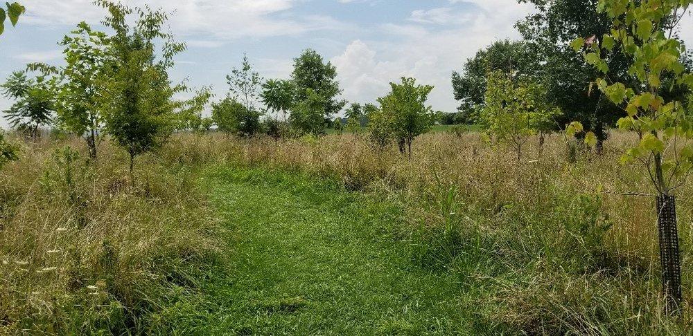 cornfield-trail-3.jpg