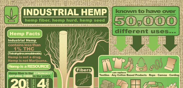 Hemp-Infographiccropped-min.jpg