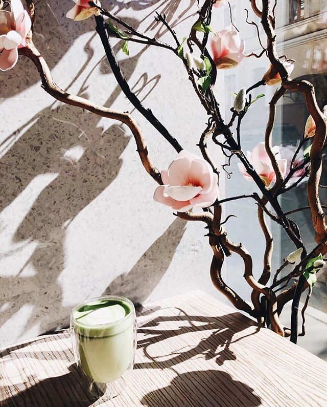 A little Monday inspiration with a cup of matcha magic and beautiful Japanese cherry blossoms 🌸🍵 #mymatchafix | 📷 @lena_kozhina