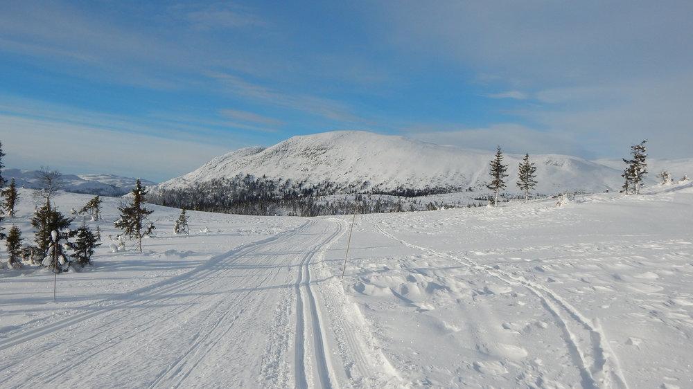 Skiløype_Sørbølfjell.jpg