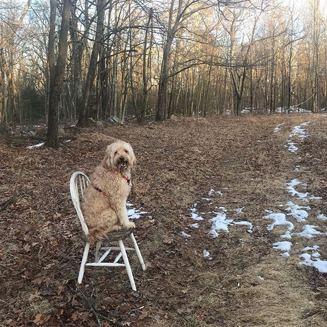Your dog might not get enough exercise when she takes the first seat she finds along the way. #randomchair #lazydoodle