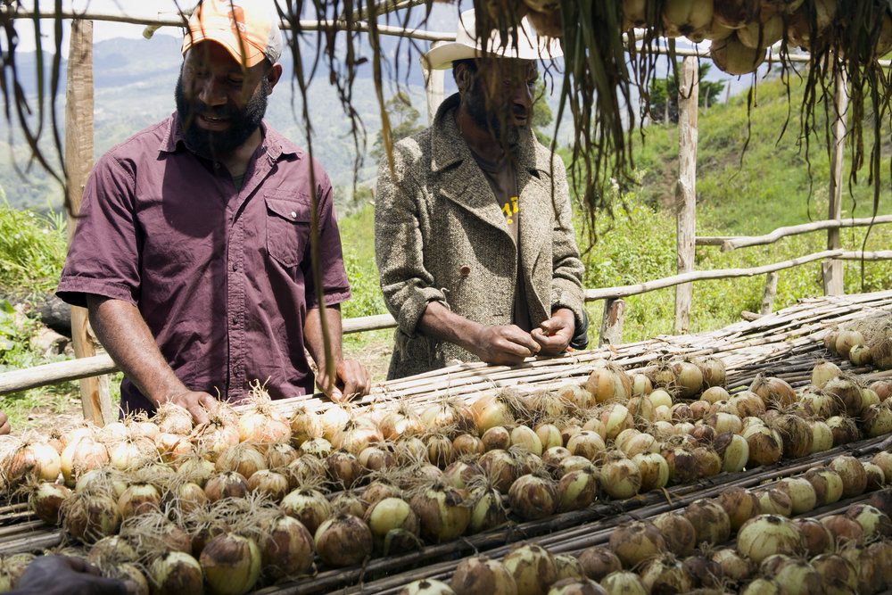 Post Harvest Officer Chris Suya (left) and bulb onion farmer Max Soa (right) inspect their first harvest. This bulb onion cooperative in Maramun village lost 80 per cent of their harvest due to the El Nino-driven drought. Simbu Province, Papua New Guinea.