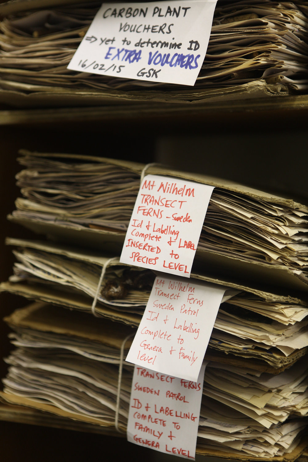 Specimens from rainforest trees in the Binatang Research Centre herbarium.