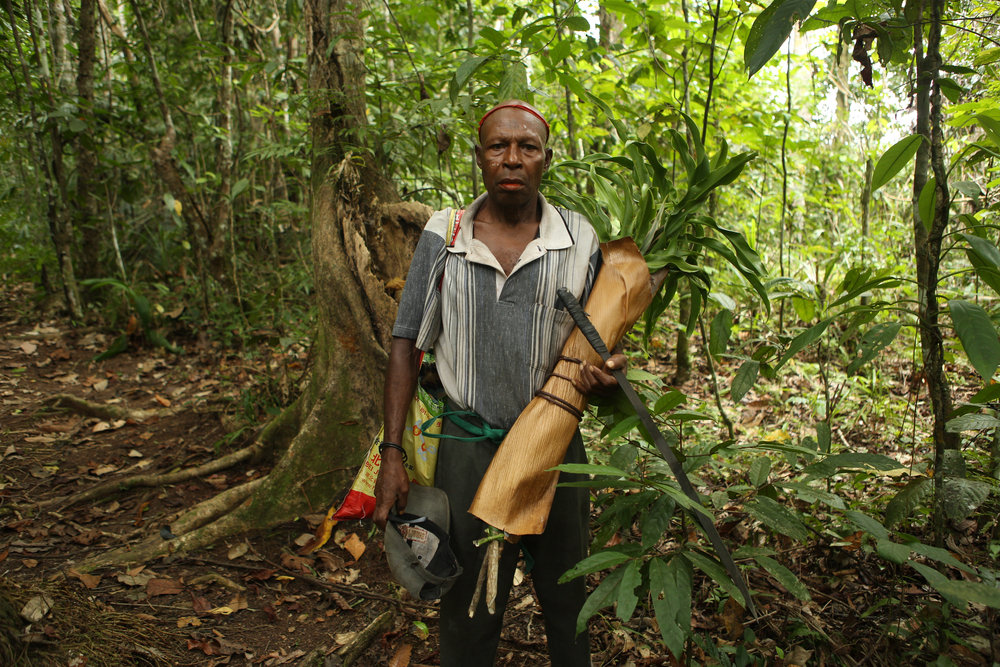Pius Isua collecting  tanget  plants ( Tok Pisin  name), botanical genus  cordyline , to plant around his house for decoration. Ohu Conservation Area, near Madang, Papua New Guinea.
