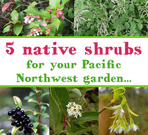 Five pacific northwest native shrubs to plant in your garden the clockwise from top left salal by jami dwyer oceanspray by us forest service publicscrutiny Images