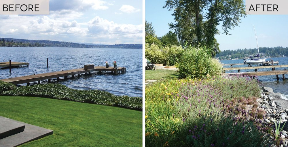 Green Shoreline Design, Native Upland and Emergent Vegetation, Puget Sound Shoreline (The Watershed Company)