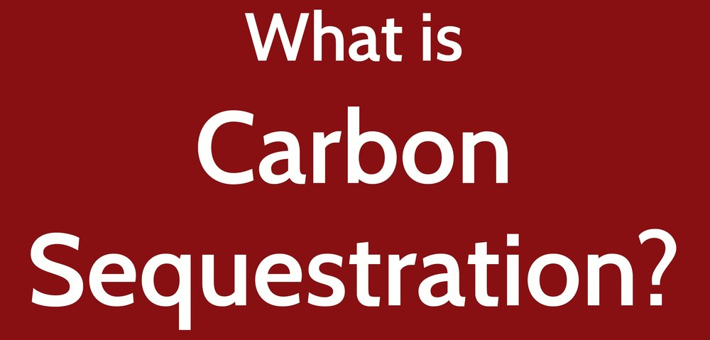 - Carbon sequestration refers to the long-term storage of carbon in plants, soils, geologic formations, and the ocean. Sequestration prevents carbon release to the atmosphere where it would otherwise contribute to global warming through the greenhouse effect. Carbon may be sequestered in long-lived organisms, buried in soils or sediments, or stored in deep low-oxygen waters.