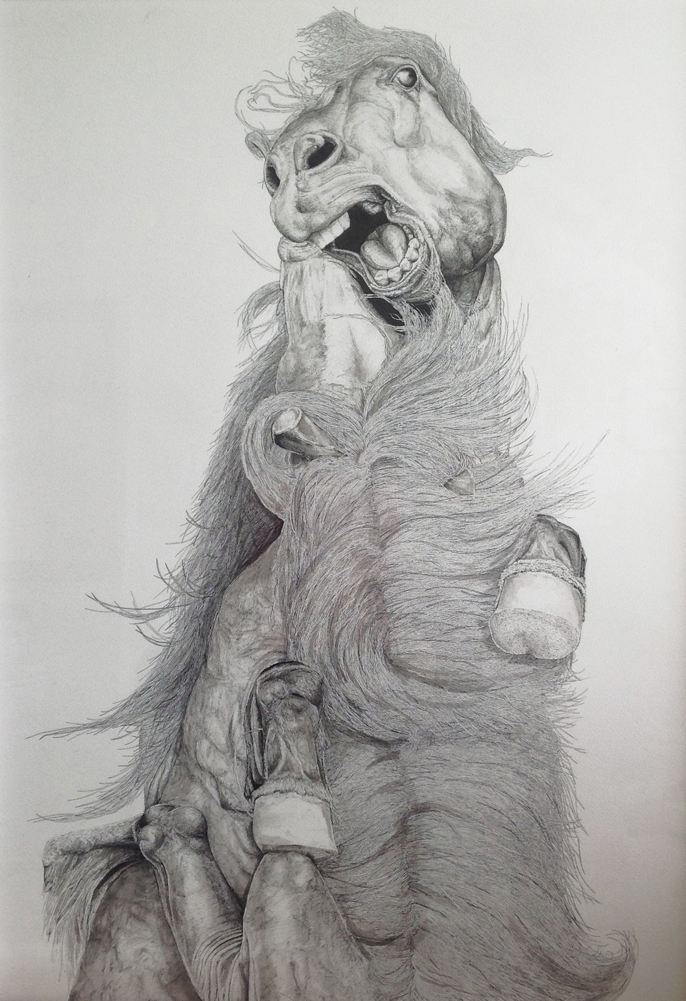 'FIGHT'  2013 PEN AND INK WASH ON CARDRIDGE PAPER - 500x700mm