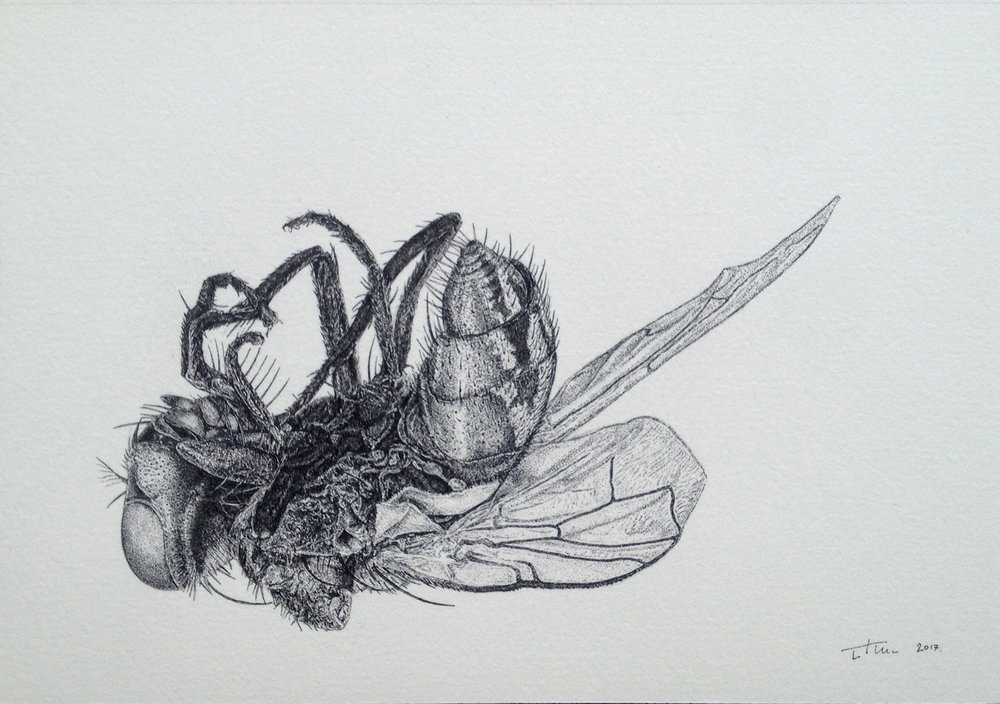 'DEAD FLY', 2017 PEN ON CARTRIDGE PAPER 210X152mm