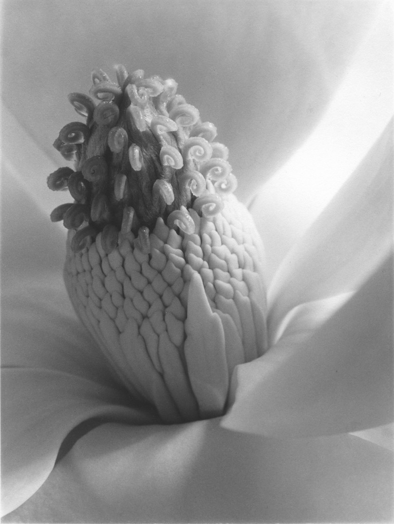 Magnolia, Tower of Jewels , 1925