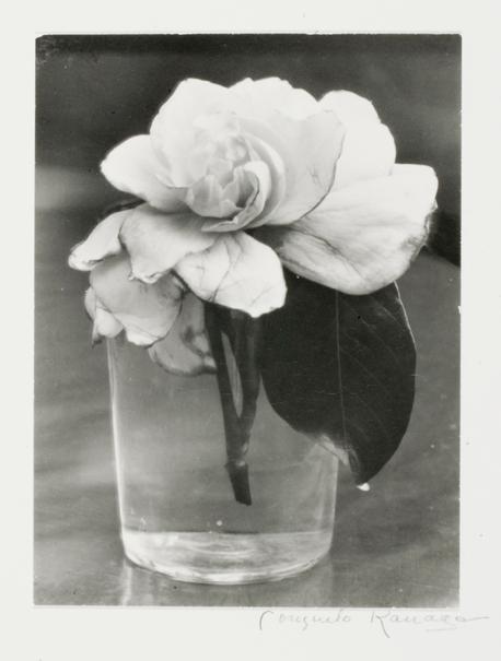 T  he Camellia , 1927