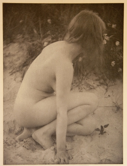 Sand and Wild Roses , 1901