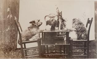 """Possum, Marquis, Boojum"" Photograph by Marian Hooper Adams, 1883."