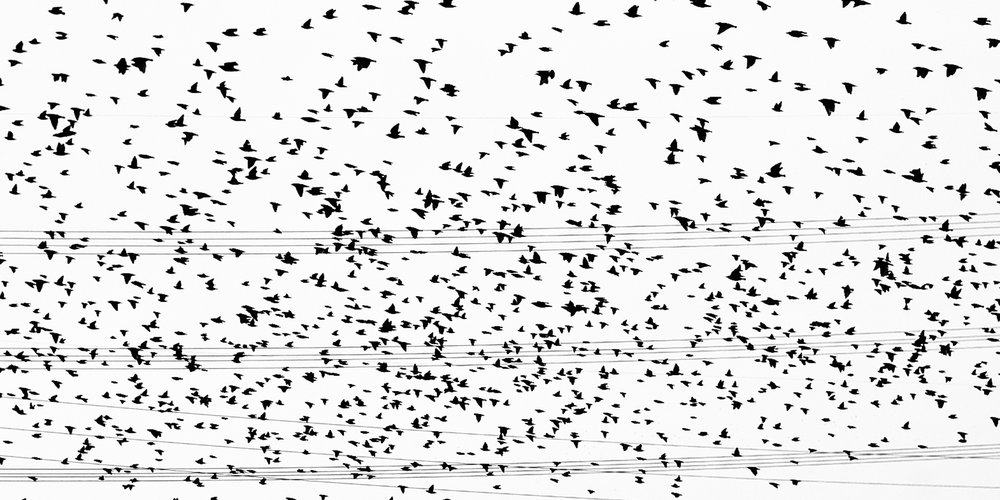 starlings at slc ikea