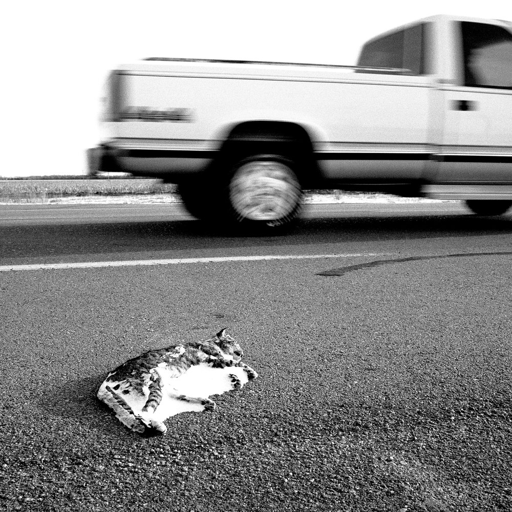 nebraska road kill