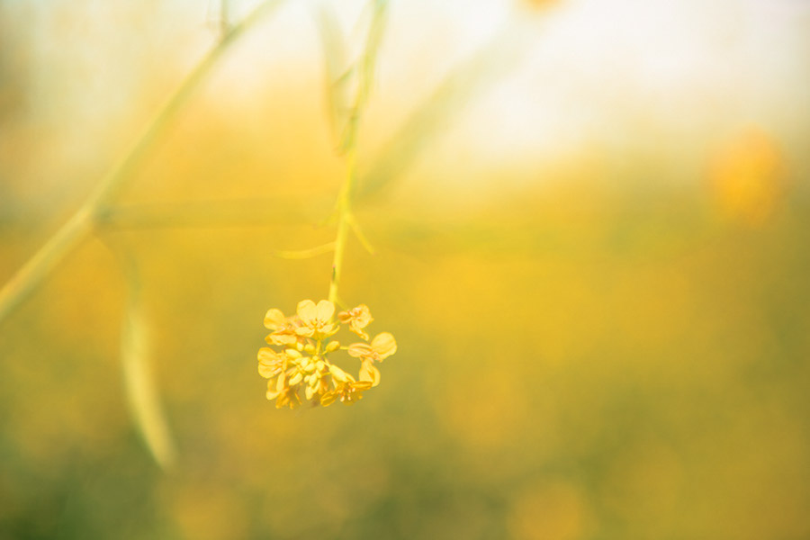 Yellow flower with blurred background