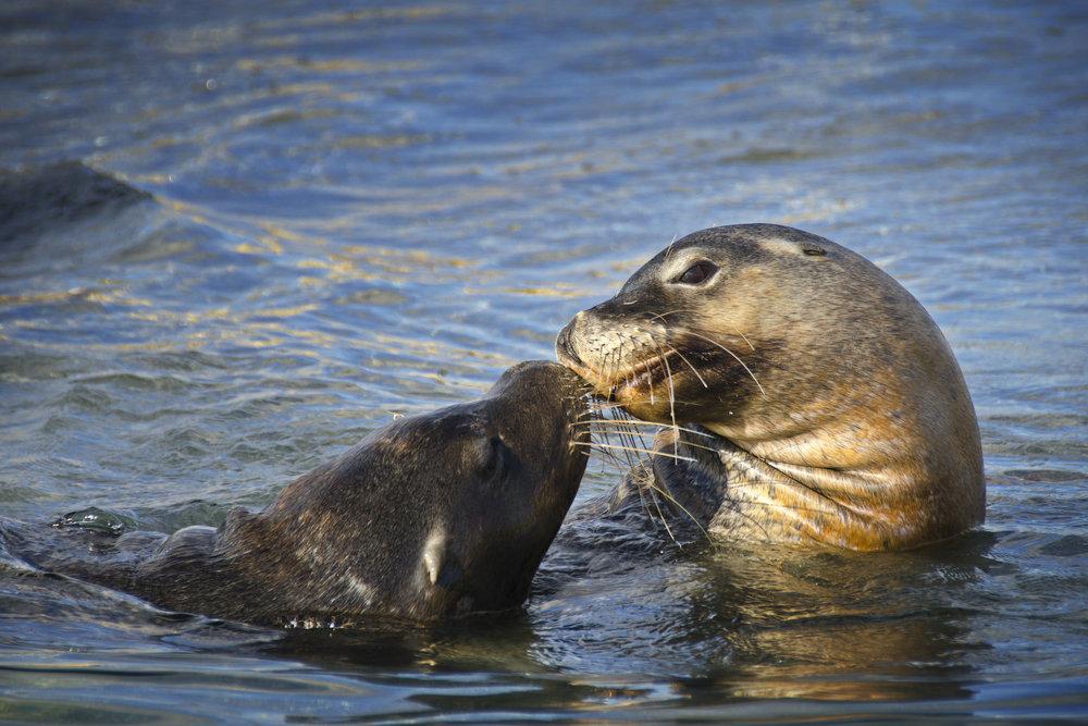 sea lions australia perth