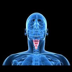 modernthyroid.png