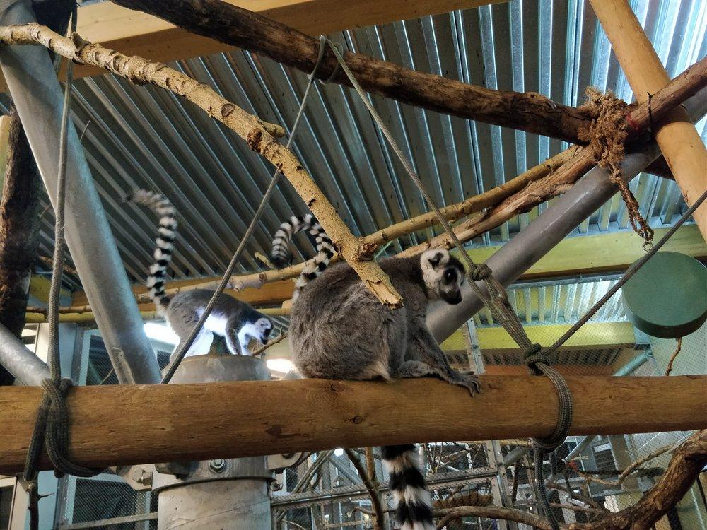 Lemurs Up Close.jpg