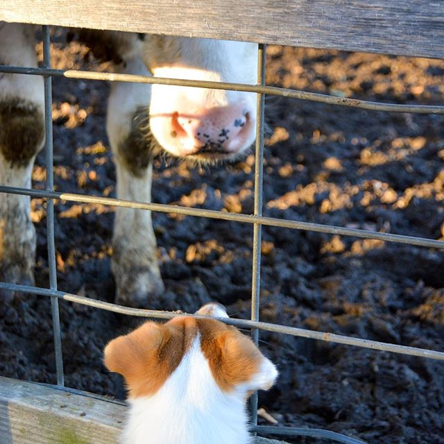 Making friends at the farm