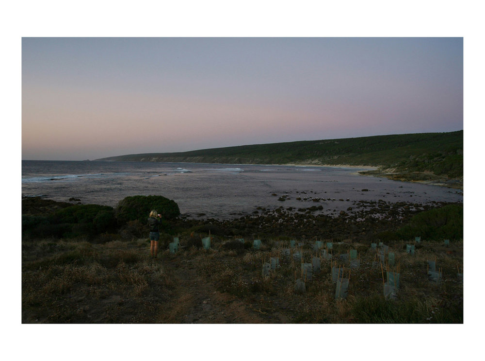 Recorda (Holly)  (Dunsborough, Australia, 2010) by Johnny Green (31 x 41cm)   Price: £200   Size: 12.2 H x 16.2 W x 0.8 in   This is the 1st of 21 Limited Edition C-type Lambda prints, encased in a beautiful, silver metallic frame. The matt photograph has an elegant off white mount which is signed and numbered by the artist.