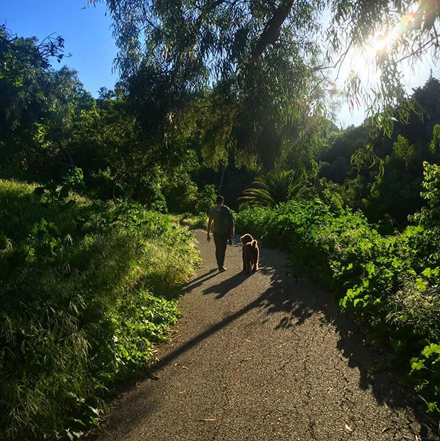 Late afternoon walk in the sun.  #sunlight #palosverdes #socal #dog #walking #shadows #path #road