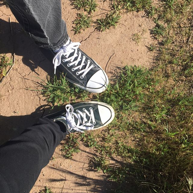 Hike at Saddlepeak  #SoCal #California #converse #sunnyday #chapparal #eriogonum #ceonothus #hike #nativeflora #nativeplants #stuntroad @aacolorpost #santamonicamountains