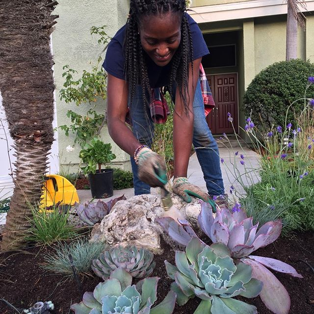 Our latest garden was a success due in no small part to design and succulent expertise from  @garden.butterflyla 🦋 Thank you 🦋 and we look forward to the next collaboration! #gardendesign #succulents #Landscapedesign #Teamwork #gardens #gardening #pollinators 🌻#pollinatorgarden🐝 #SoCal #SouthBay #sustainabledesign #sustainability #echeveria #gardenconsultant #gardenmagiccompany