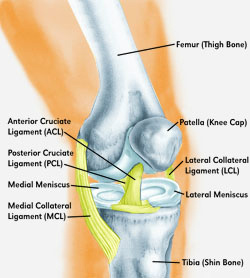 knee-structure.jpg