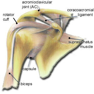 shoulder-structure2.jpg