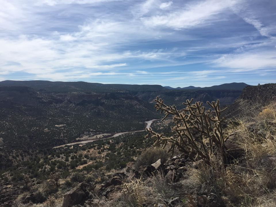 Cholla cactus on the edge of white rock canyon with rio grande river below