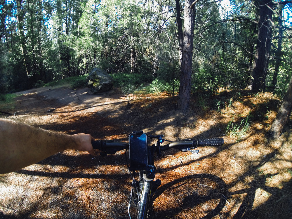 Mountain Biking at Lewis Creek